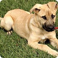Adopt A Pet :: Meagan - Brattleboro, VT