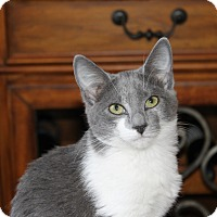 Adopt A Pet :: Della - Homewood, AL