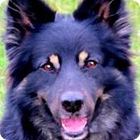Adopt A Pet :: ASPEN(OUR