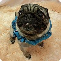 Adopt A Pet :: POCOHANTAS - New Cumberland, WV