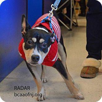 Staffordshire Bull Terrier Dog for adoption in Willingboro, New Jersey - Radar