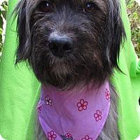 Adopt A Pet :: Pooh Bear - Irvine, CA