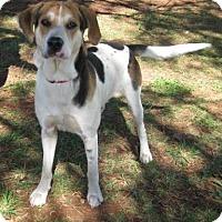 Adopt A Pet :: Walker - Huntsville, AL