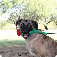 Adopt A Pet :: Becca / Courtesy Posting - Tucson, AZ