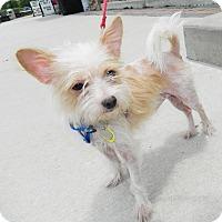 Adopt A Pet :: Prince - Umatilla, FL
