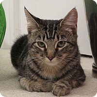 Adopt A Pet :: ZuZu - Columbus, OH