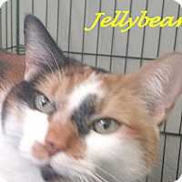 Adopt A Pet :: JellyBean - Chisholm, MN