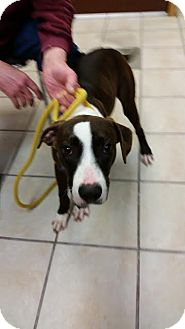 Hound (Unknown Type) Mix Dog for adoption in Chippewa Falls, Wisconsin - Hutch