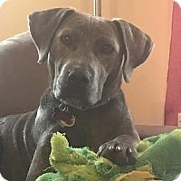 Adopt A Pet :: Phoenix - Athens, GA