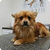 Adopt A Pet :: Conner - Monrovia, CA
