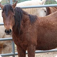 Adopt A Pet :: Diesel - El Dorado Hills, CA