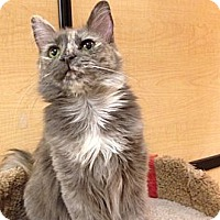 Adopt A Pet :: Chloe - Foothill Ranch, CA