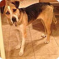 Adopt A Pet :: Skylar - Scottsdale, AZ