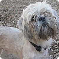 Adopt A Pet :: Dexter - Phoenix, AZ