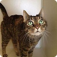 Adopt A Pet :: SweetiePie - Pittstown, NJ