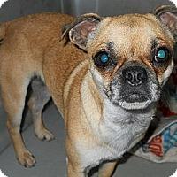 Adopt A Pet :: Cinders - dewey, AZ