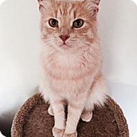 Adopt A Pet :: Waldo - N. Billerica, MA