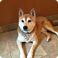 Adopt A Pet :: Taiyosan - Centennial, CO
