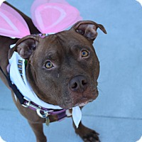 Adopt A Pet :: Zena - Shrewsbury, NJ