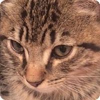 Adopt A Pet :: Razzle - Long Beach, NY