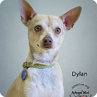 Adopt A Pet :: Dylan - Phoenix, AZ