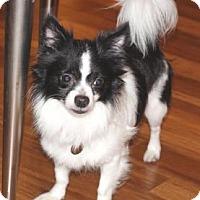 Adopt A Pet :: Rebel - Atlanta, GA