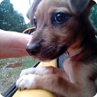 Adopt A Pet :: Skippy - Lebanon, CT