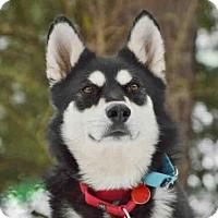 Adopt A Pet :: JULIET - Pittsburgh, PA