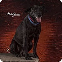 Adopt A Pet :: Maybeline-pending adoption - Manchester, CT