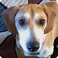 Adopt A Pet :: Dana - Houston, TX