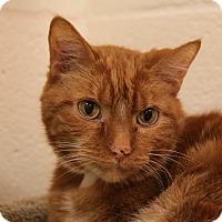 Adopt A Pet :: Sonny - Sarasota, FL