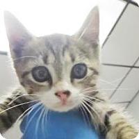 Adopt A Pet :: Jed I Knight - Lincolnton, NC
