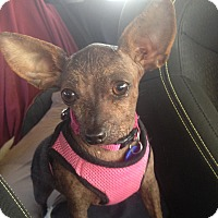 Adopt A Pet :: Clarissa - 8 lbs! - Los Angeles, CA