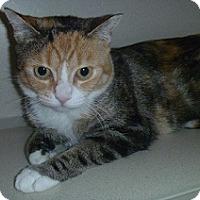Adopt A Pet :: Jeanette - Hamburg, NY
