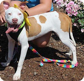 Terrier (Unknown Type, Medium) Mix Dog for adoption in Mocksville, North Carolina - Flower