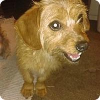 Adopt A Pet :: Goldie - Des Moines, IA