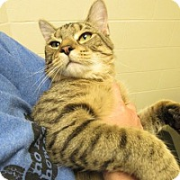 Adopt A Pet :: Comet - Windsor, VA