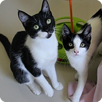Adopt A Pet :: Mabel & Felicia love kids! - Studio City, CA