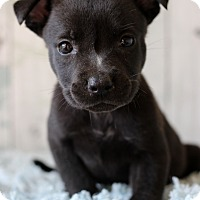 Adopt A Pet :: Happy - Waldorf, MD