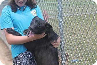 Labrador Retriever Mix Dog for adoption in Savannah, Tennessee - James