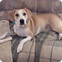 Adopt A Pet :: Otis - Smithtown, NY