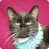 Adopt A Pet :: Oscar - Jackson, MI