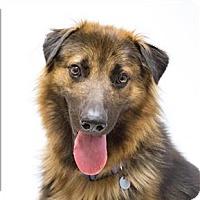 Adopt A Pet :: Scrabble - San Luis Obispo, CA