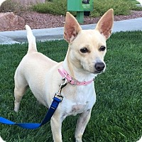 Terrier (Unknown Type, Small) Mix Dog for adoption in Las Vegas, Nevada - Ava