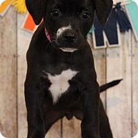 Adopt A Pet :: Flower - Waldorf, MD