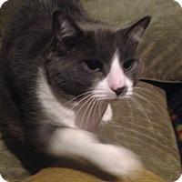 Adopt A Pet :: Kicza - Montreal, QC