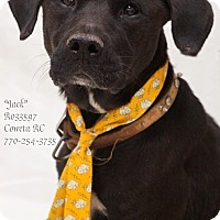Labrador Retriever Mix Dog for adoption in Newnan City, Georgia - Jack