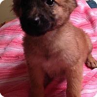 Adopt A Pet :: Raylyn - Trenton, NJ