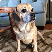 Adopt A Pet :: Miss Trundle - Kansas City, MO