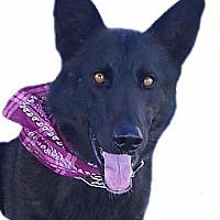 Adopt A Pet :: Bailey guys best friend - Sacramento, CA